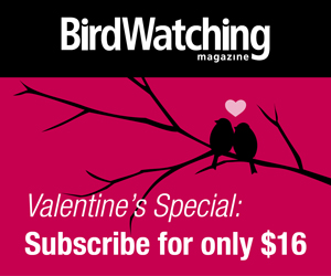 Valentine's Day Special Offer: Subscribe to BirdWatching Magazine
